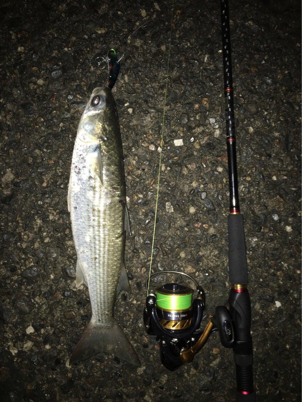 佐藤 勇登さんの投稿画像,写っている魚は