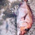 ムラテツさんの大分県国東市での釣果写真
