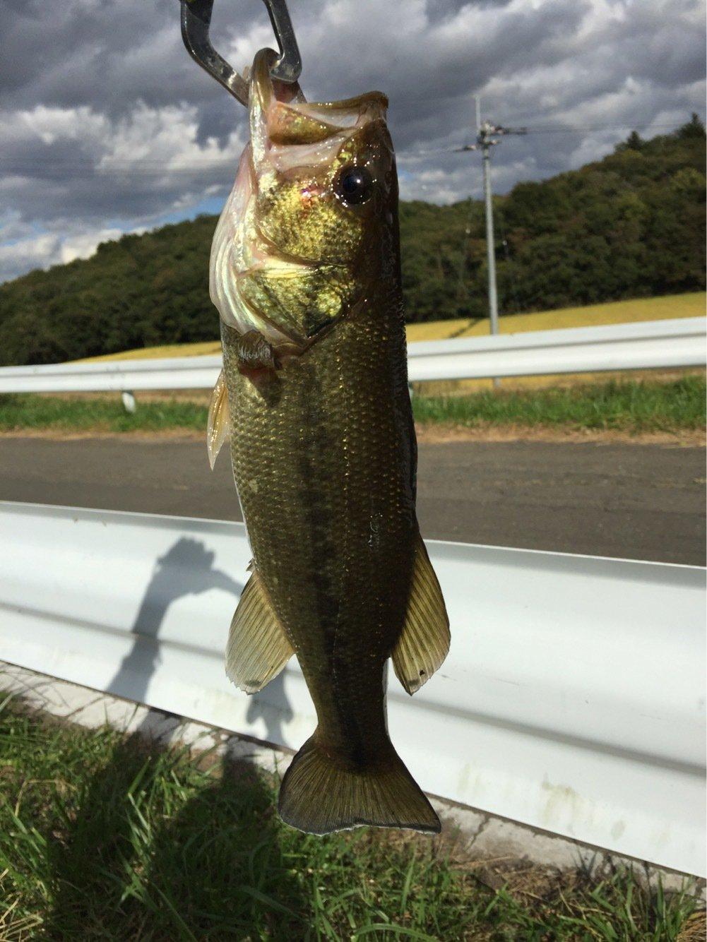 しのさんの投稿画像,写っている魚はブラックバス