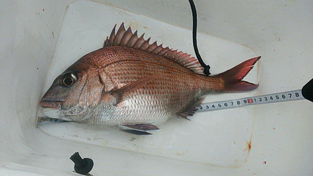 Simonさんの投稿画像,写っている魚はサクラダイ