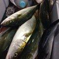 てmぽこさんの神奈川県藤沢市でのブリの釣果写真