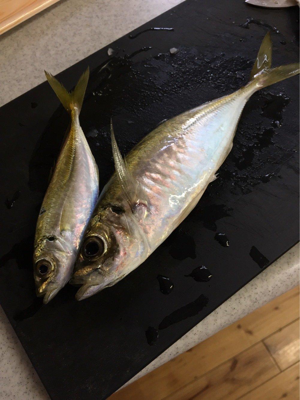 すーさんの投稿画像,写っている魚はアジ