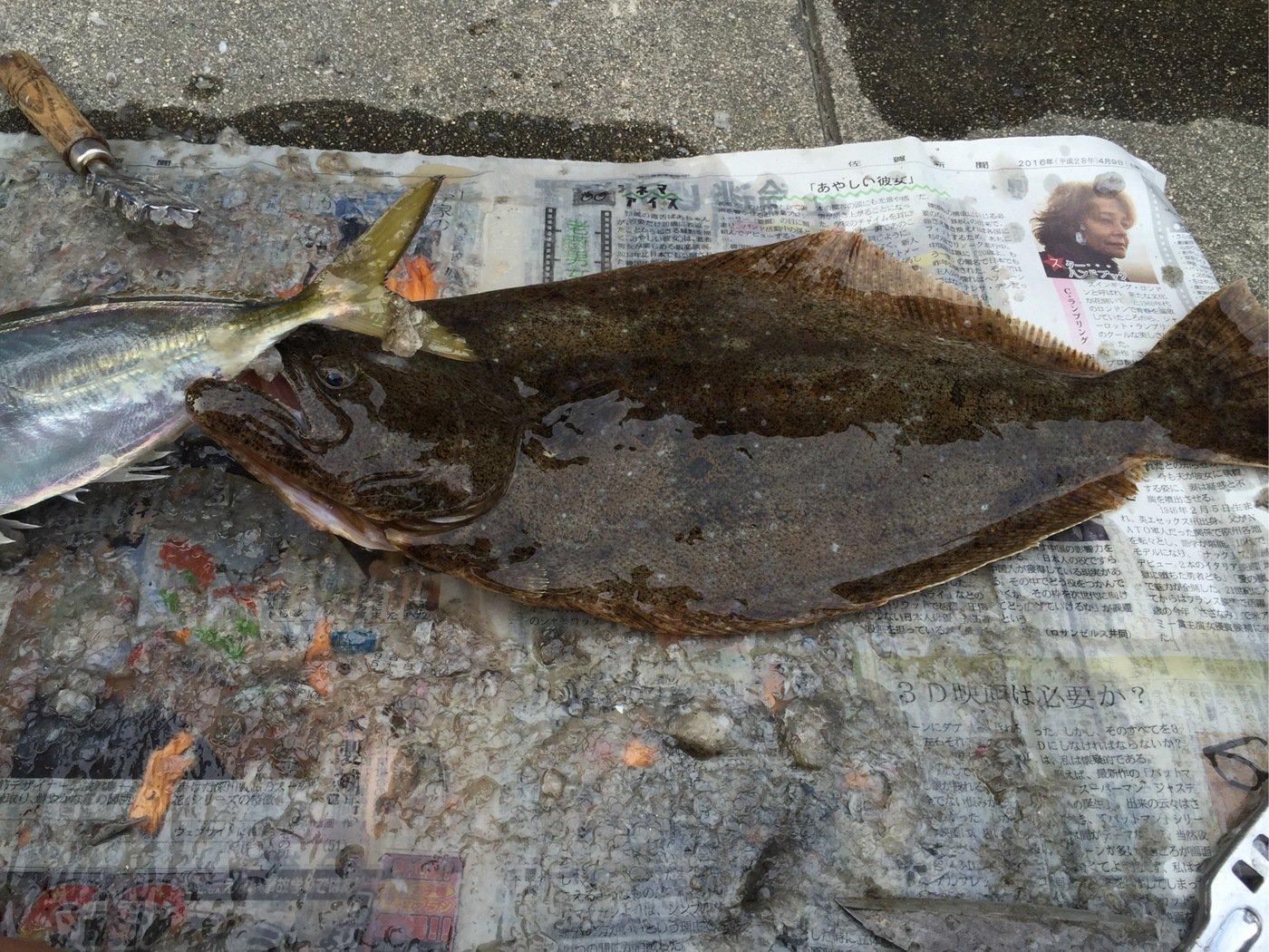 sJimさんの投稿画像,写っている魚はヒラメ