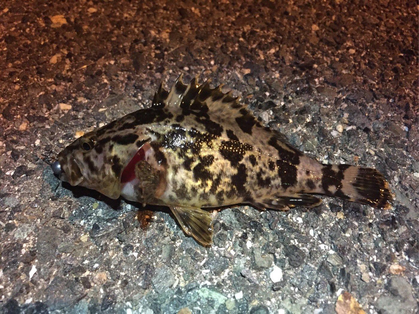 いーさんの投稿画像,写っている魚は