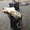 ゆーちぇけさんの福岡県筑紫野市での釣果写真