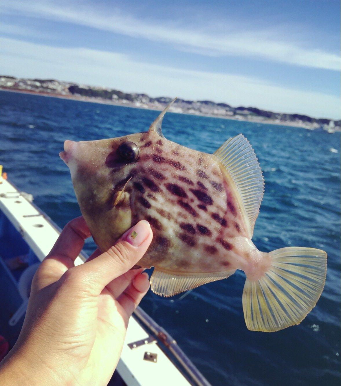 Bunさんの投稿画像,写っている魚はカワハギ