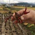 岳丸さんの長野県上田市での釣果写真