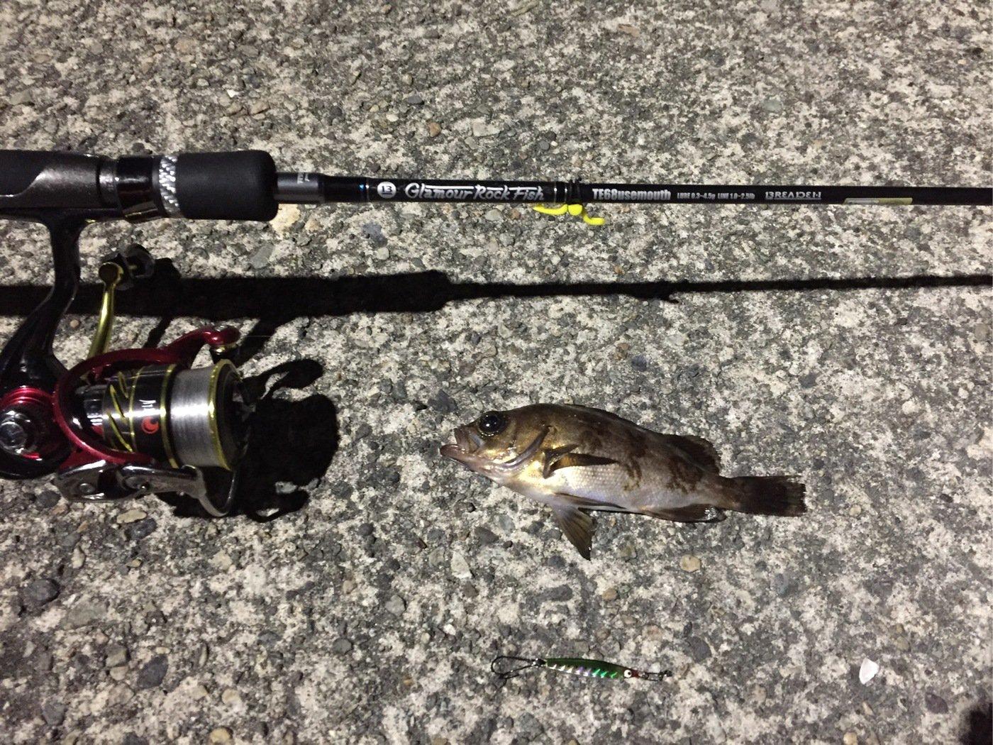 ユウキさんの投稿画像,写っている魚はシロメバル