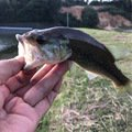 ひとしさんの岡山県総社市での釣果写真