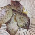 かリんさんの北海道奥尻郡での釣果写真
