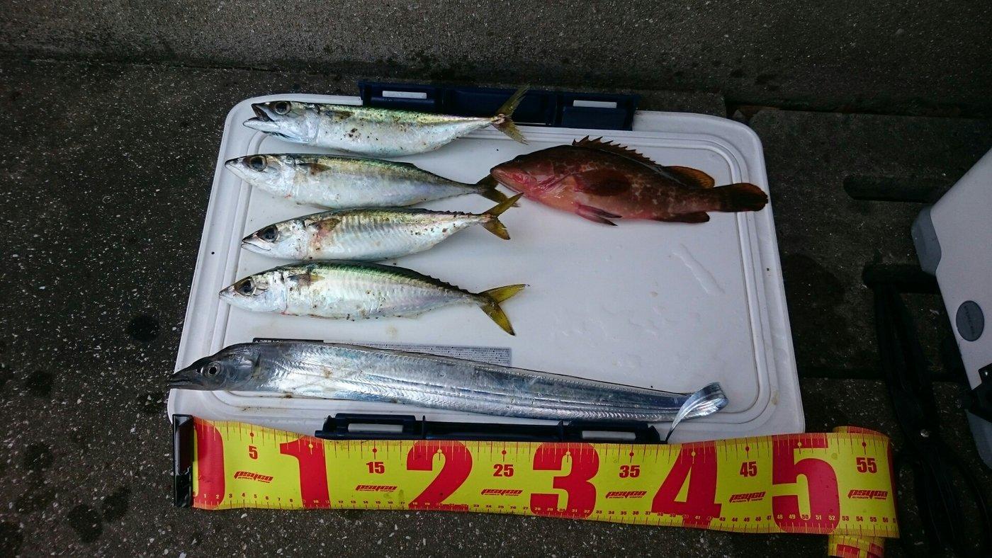 なおさんの投稿画像,写っている魚はタチウオ