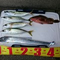 なおさんの福岡県筑紫野市での釣果写真