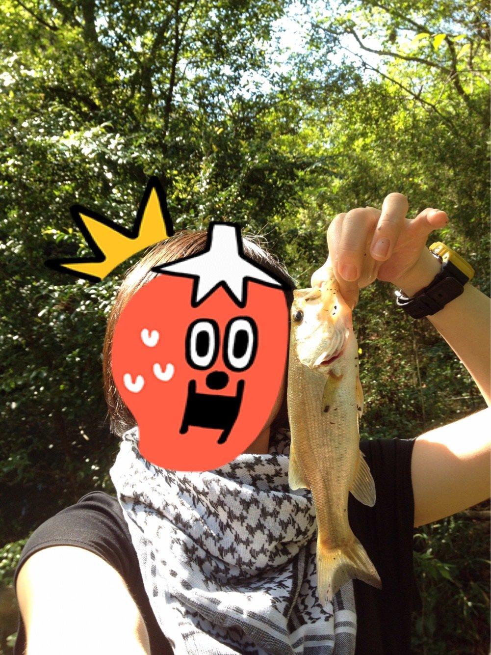 がうよしさんの投稿画像,写っている魚はブラックバス