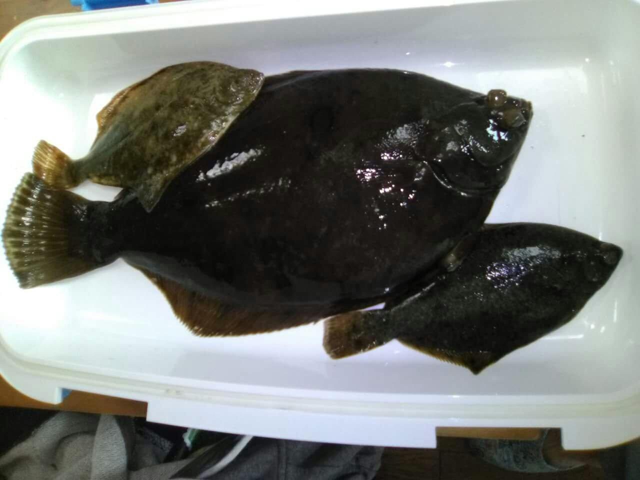 釣りバカ野郎。さんの投稿画像,写っている魚はカレイ