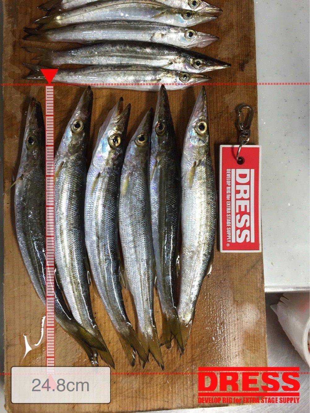 たかまっちゃんさんの投稿画像,写っている魚はカマス