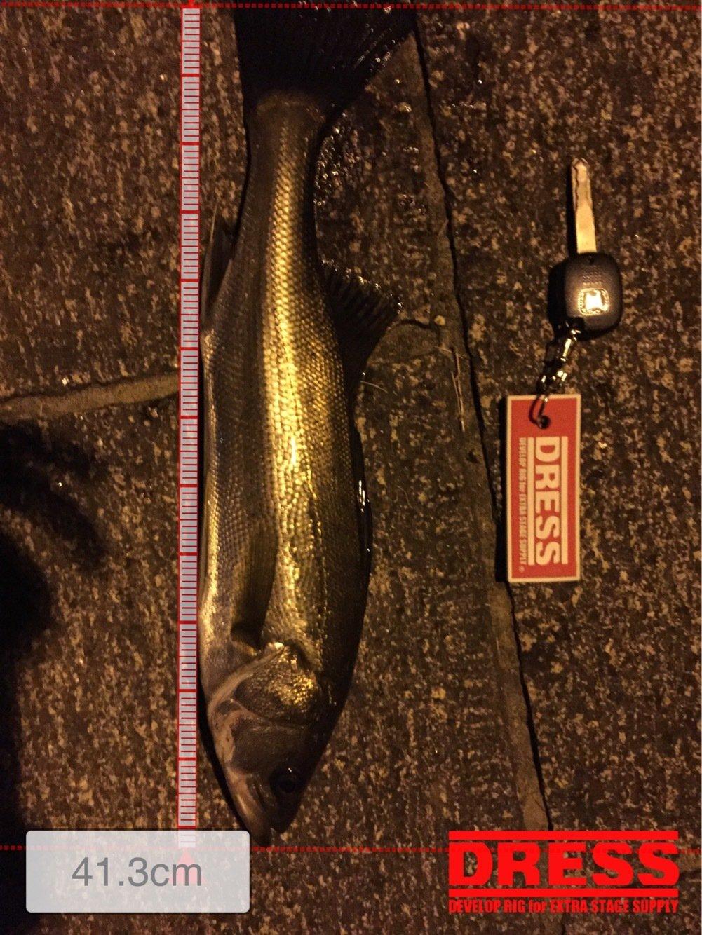 たかまっちゃんさんの投稿画像,写っている魚はスズキ