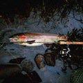 ωアゴさんの岡山県真庭郡での釣果写真