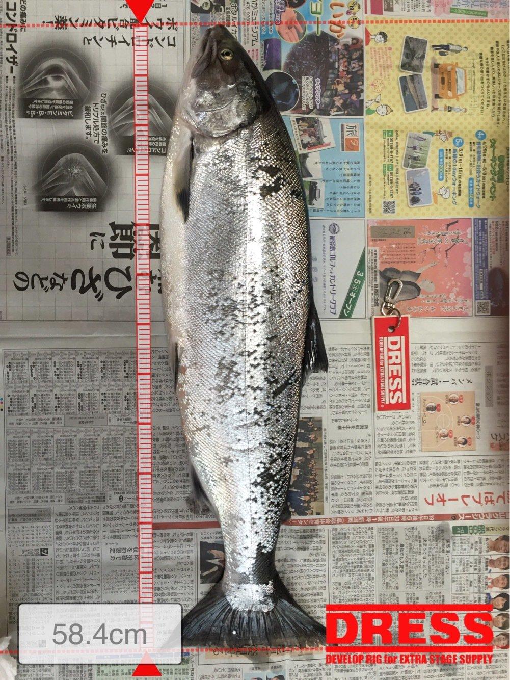 たかまっちゃんさんの投稿画像,写っている魚はサクラマス
