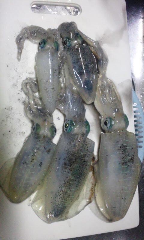たかまっちゃんさんの投稿画像,写っている魚はアオリイカ