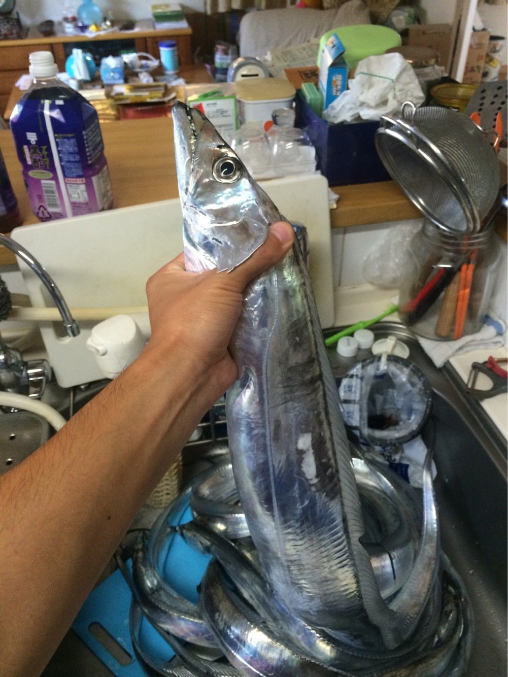 Kyoheiさんの投稿画像,写っている魚はタチウオ
