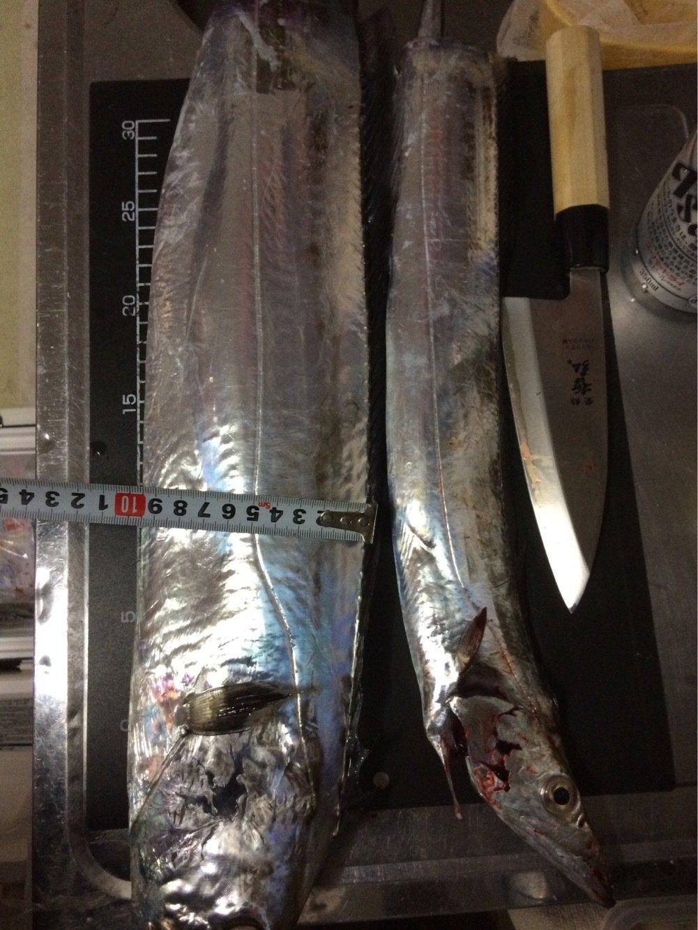 メレブさんの投稿画像,写っている魚はタチウオ