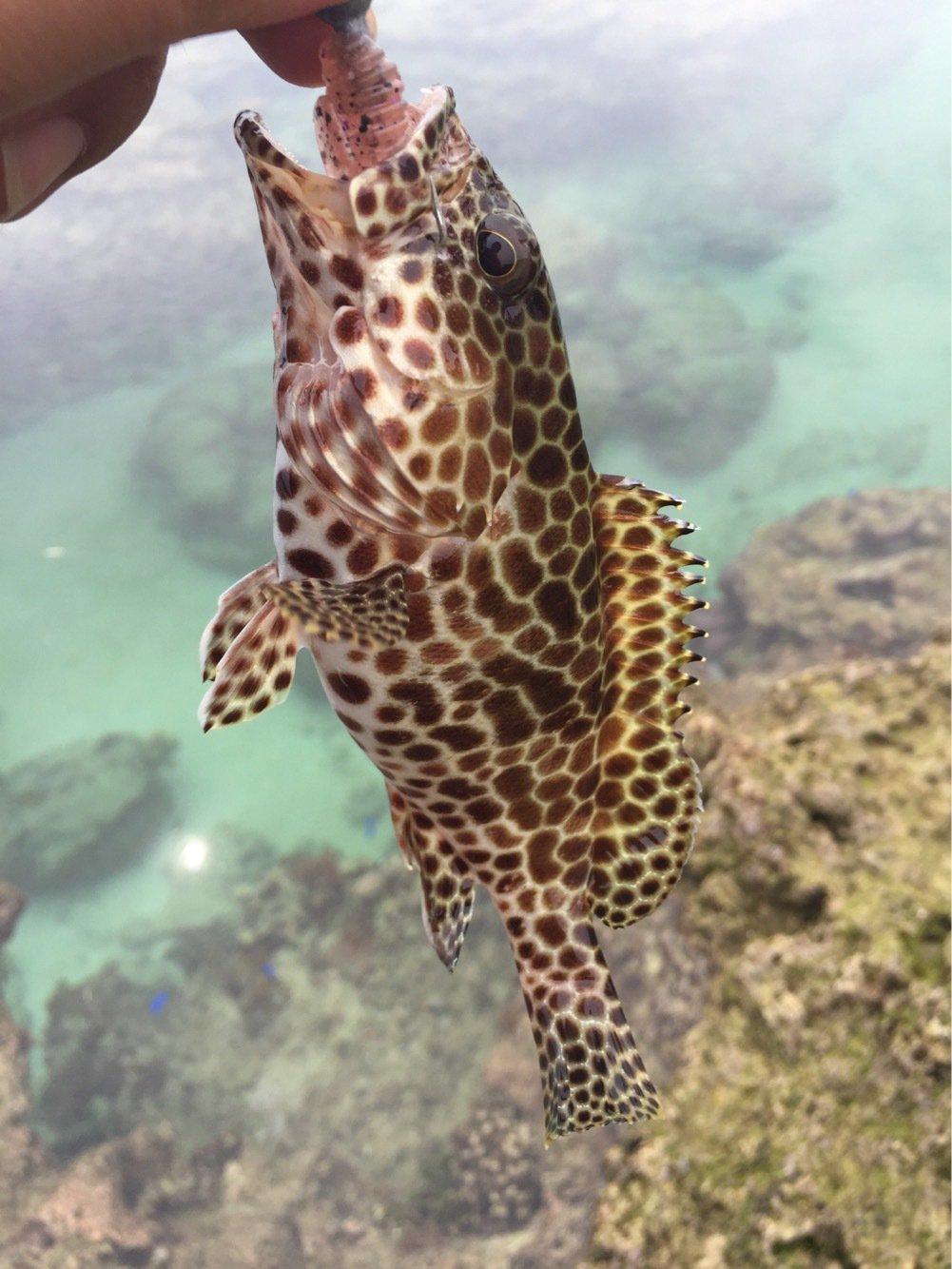 ユウキさんの投稿画像,写っている魚は
