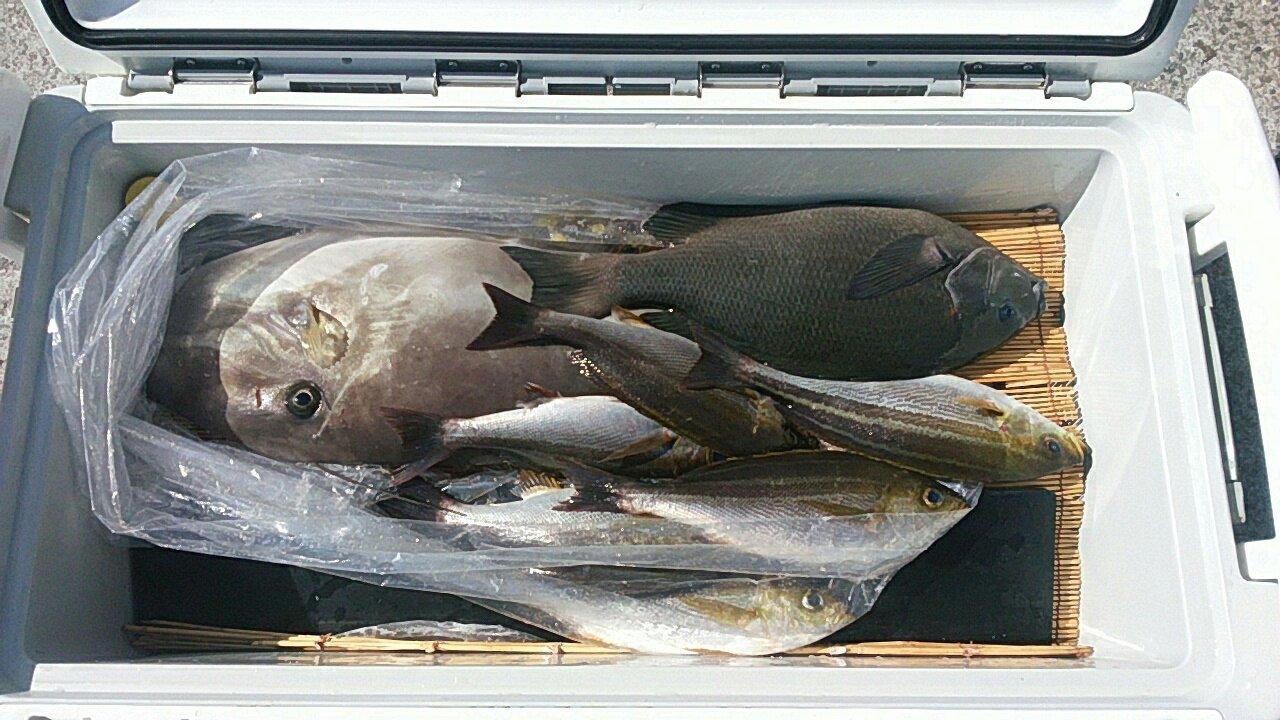 Simonさんの投稿画像,写っている魚はウスバハギ