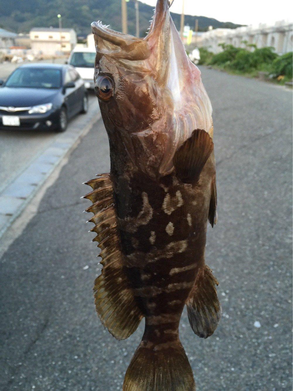 星さんの投稿画像,写っている魚は
