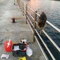 お魚屋SUNさんの兵庫県明石市でのカワハギの釣果写真