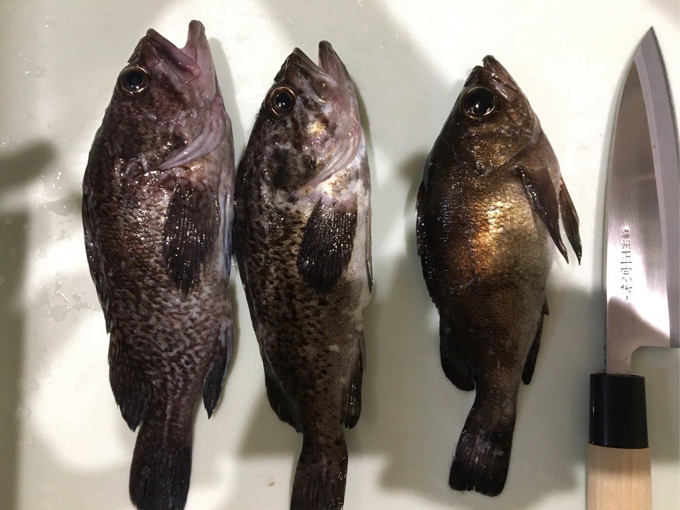 エクイップさんの投稿画像,写っている魚はソイ