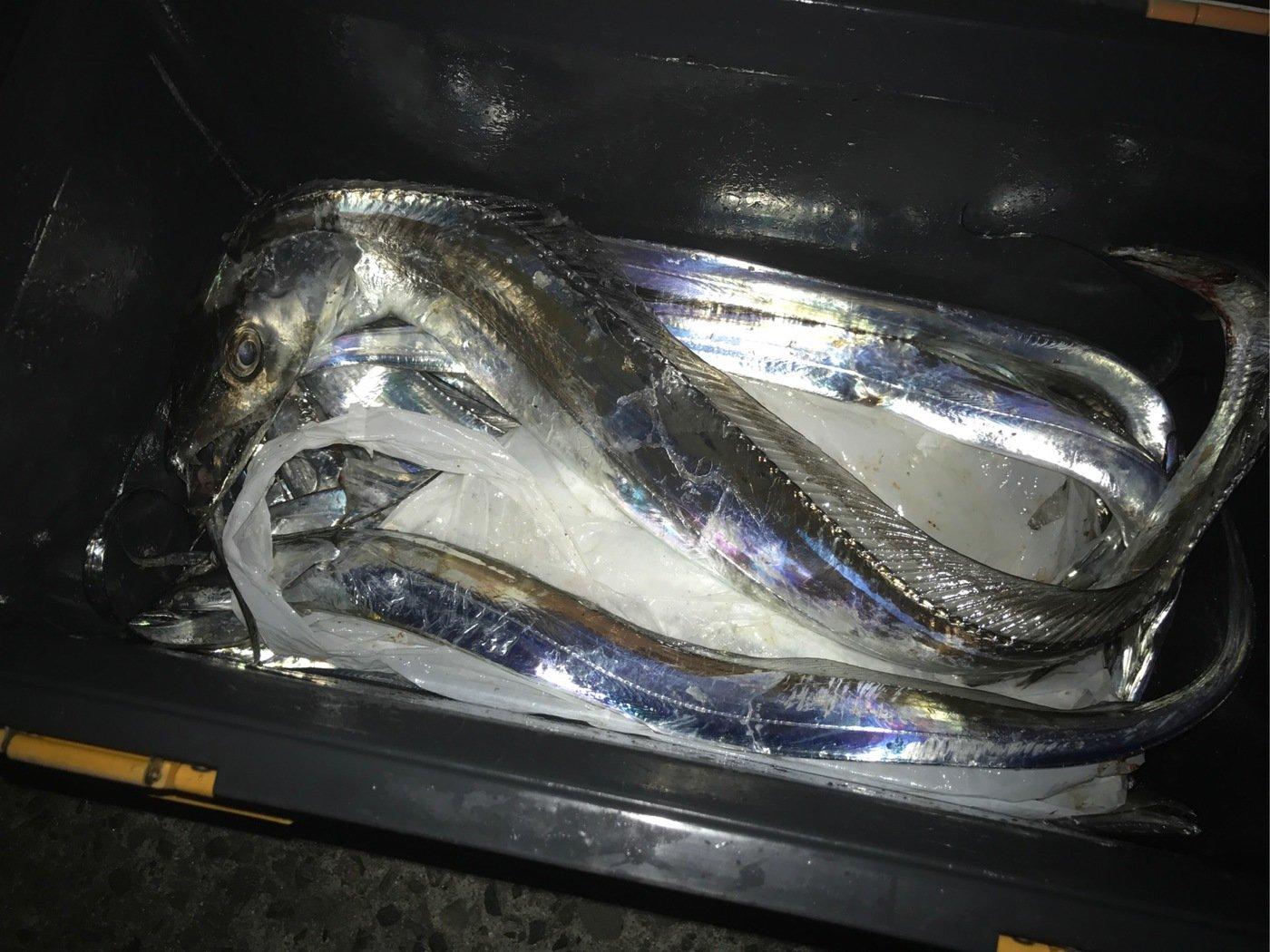 Rさんの投稿画像,写っている魚は