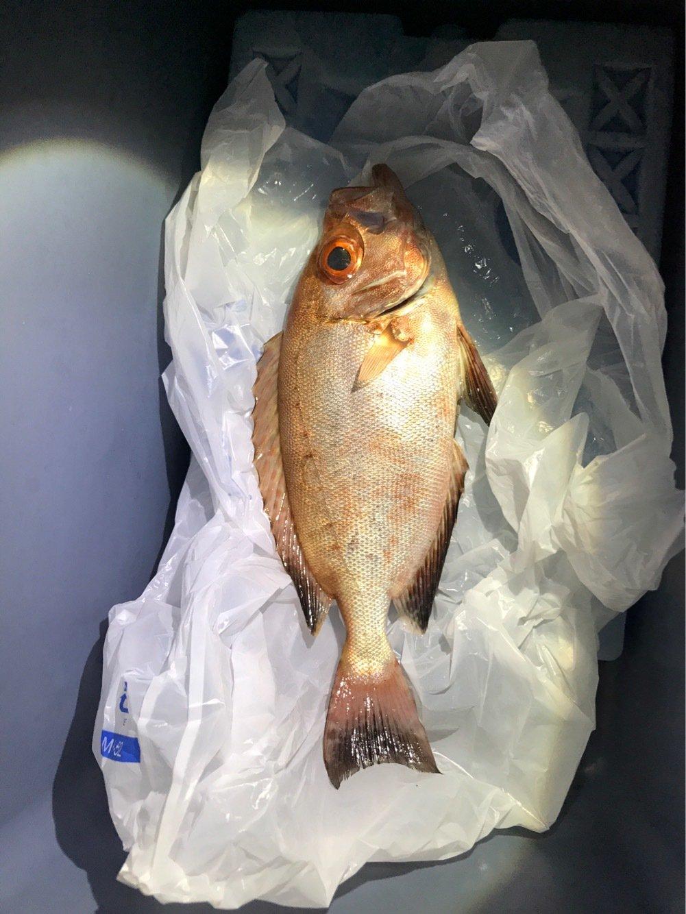 竹村さんの投稿画像,写っている魚はキントキダイ