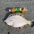 しもちんさんの北海道日高郡での釣果写真