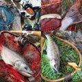 taaaamuさんの新潟県中魚沼郡での釣果写真