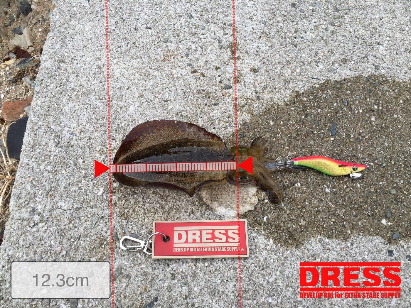 あおりぃさんの投稿画像,写っている魚はアオリイカ
