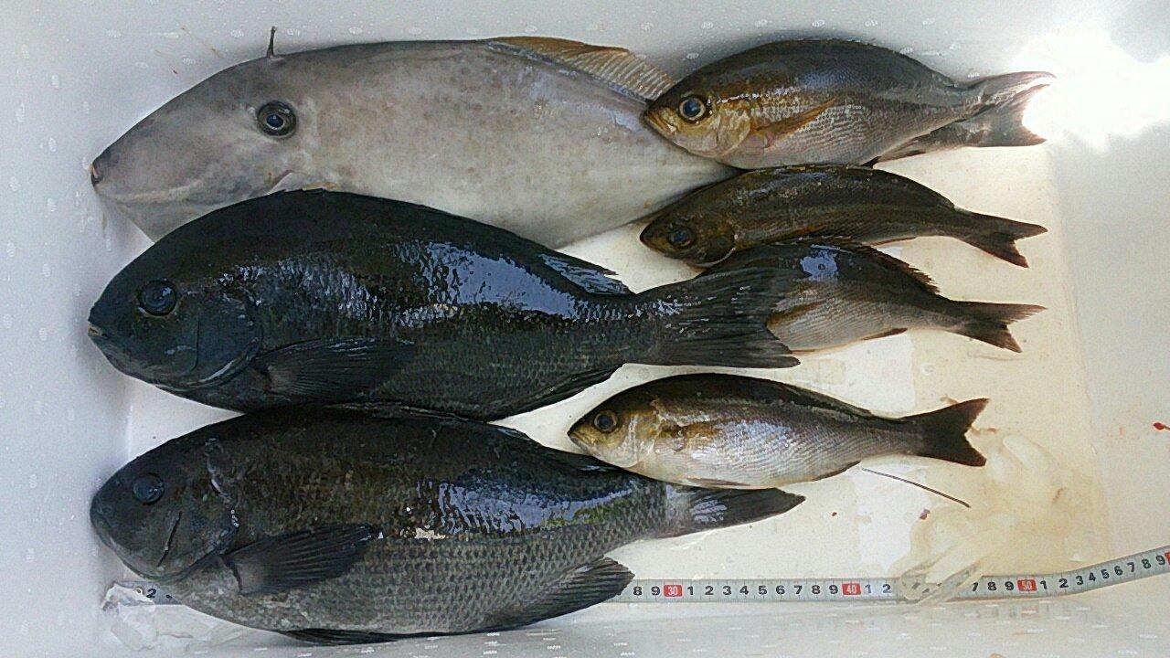 Simonさんの投稿画像,写っている魚はクロメジナ