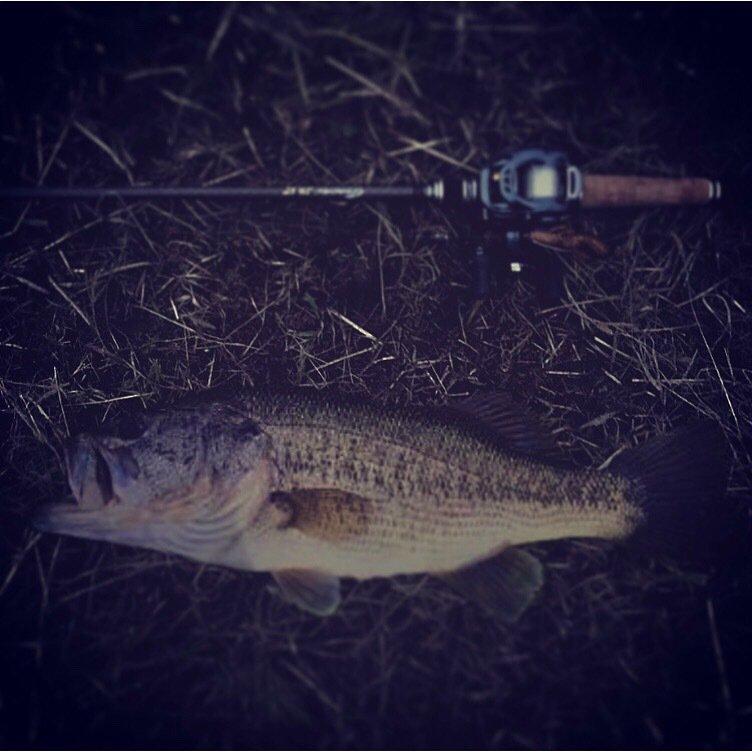 にら(週末アングラーです)さんの投稿画像,写っている魚はブラックバス