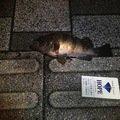 鷹山さんのシロメバルの釣果写真