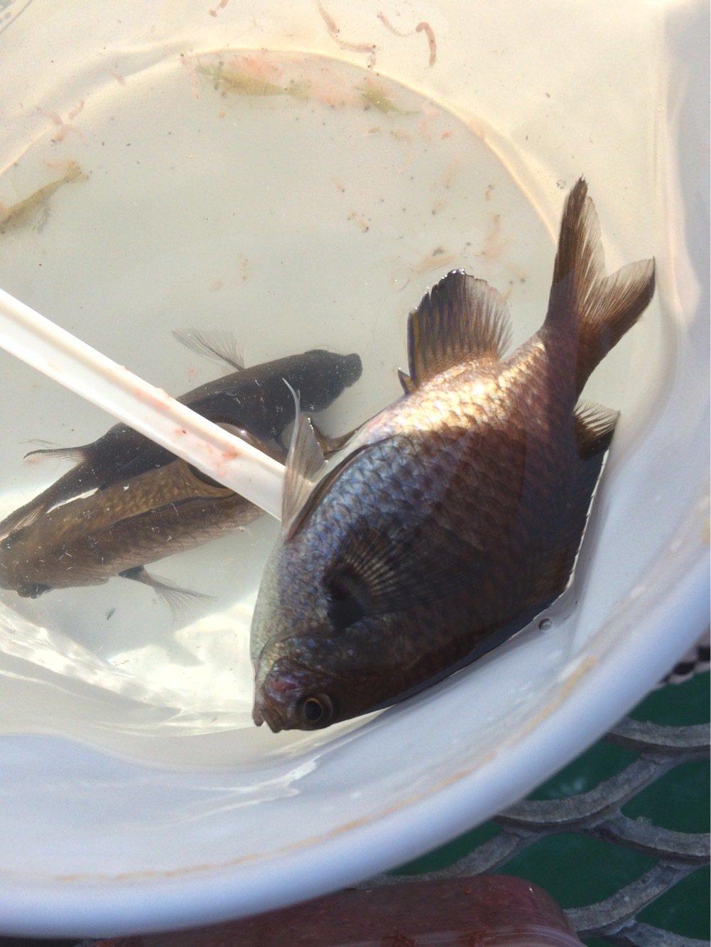 Keitaさんの投稿画像,写っている魚は