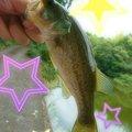 平岡真弓さんの大阪府河内長野市での釣果写真