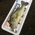 dasapiyoさんの佐賀県三養基郡での釣果写真