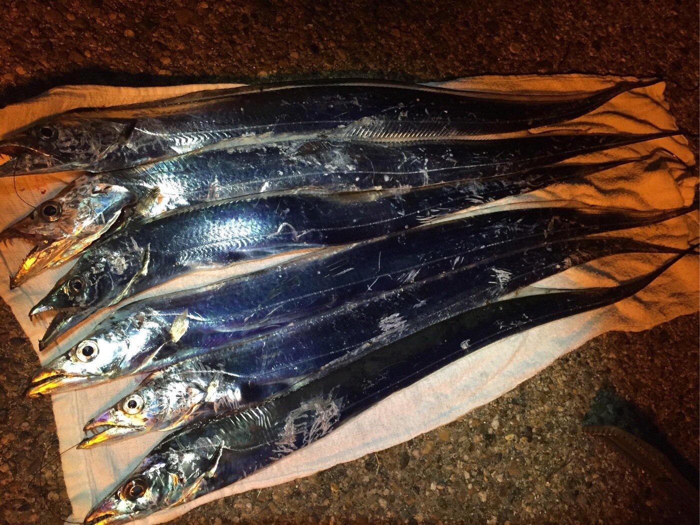 akipapaさんの投稿画像,写っている魚はタチウオ