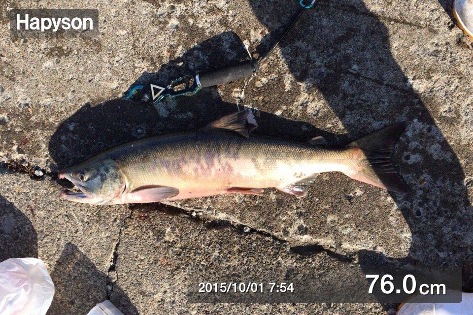 岩谷 昌幸さんの投稿画像,写っている魚はサケ