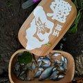 ジャンタさんの埼玉県志木市での釣果写真