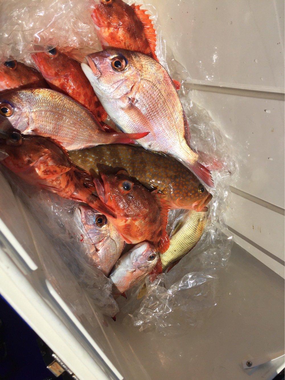 ひろちゃんさんの投稿画像,写っている魚はキジハタ