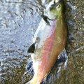 りきさんの北海道網走郡での釣果写真