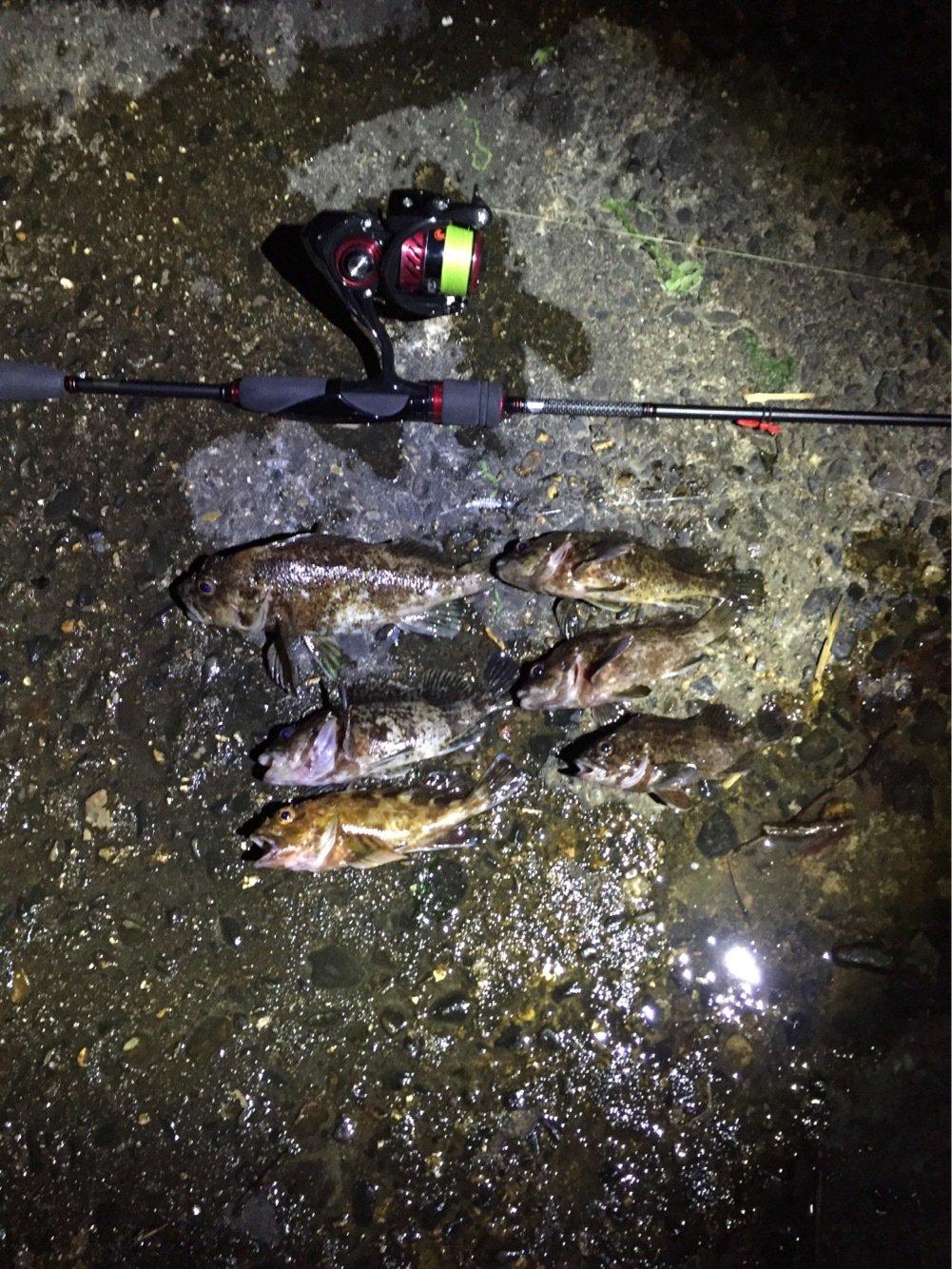 henachocoさんの投稿画像,写っている魚はメバル