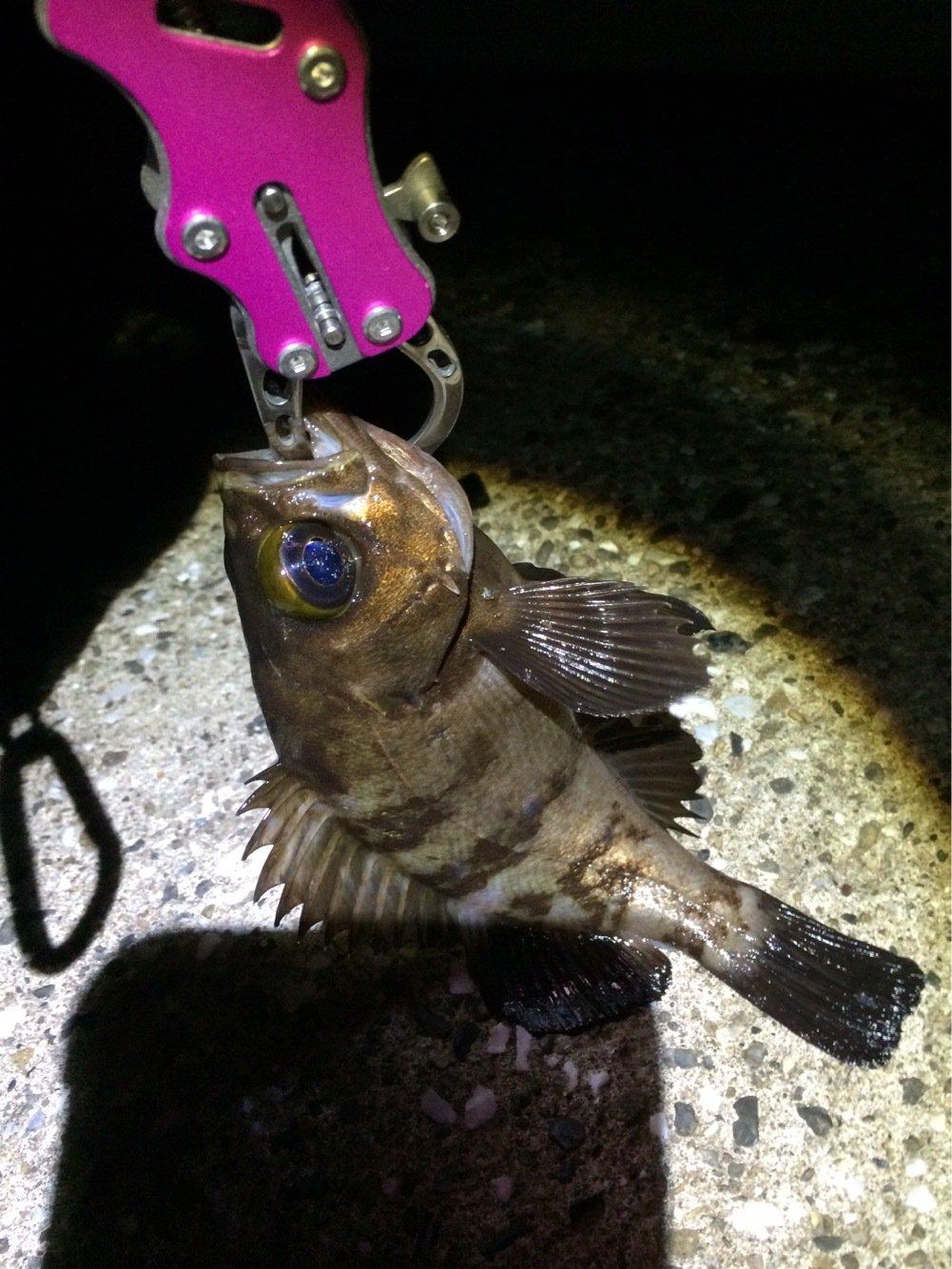 マリンさんの投稿画像,写っている魚は