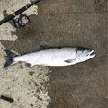 aochy0620さんの北海道紋別郡での釣果写真