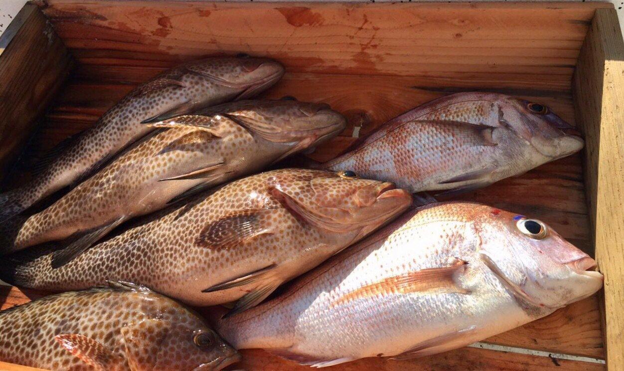 D子さんの投稿画像,写っている魚はオオモンハタ,マダイ,ゴマサバ
